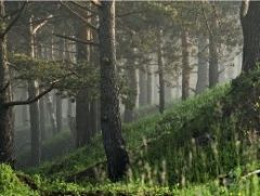 За неуплату отключена система видеонаблюдения за лесами Тольятти